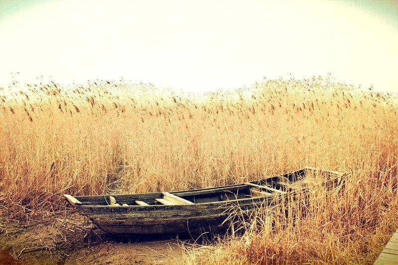 如果说远离市区有什么好?大概就是还能保留大自然的原汁原味,没有太多工业化的痕迹吧! 在经济飞速发展的魔都,或许只有崇明算得上一个最不像上海的上海吧! 那里的天很蓝,到处种植着农作物;那里的人很随和,人与人之间距离很近;那里的孩子很自由,随风奔跑。那里的水很绿,那里的风很轻~ 陆小尊去过一次崇明岛,只去过一次就逢人就推荐。所以如果你周末也没事,不如带上家人去一次崇明自驾游吧! 东平国家森林公园    --公园位于崇明岛中部,远离市区的喧嚣,环境优美、野趣浓郁,是周末休闲的好地方。 --这里有各种娱乐设施和体