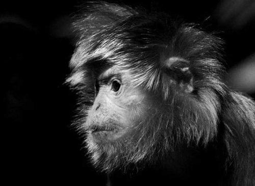 """用动物试验是错误且不道德的 大众在回应猴子试验的声明中道歉:"""" 我们"""